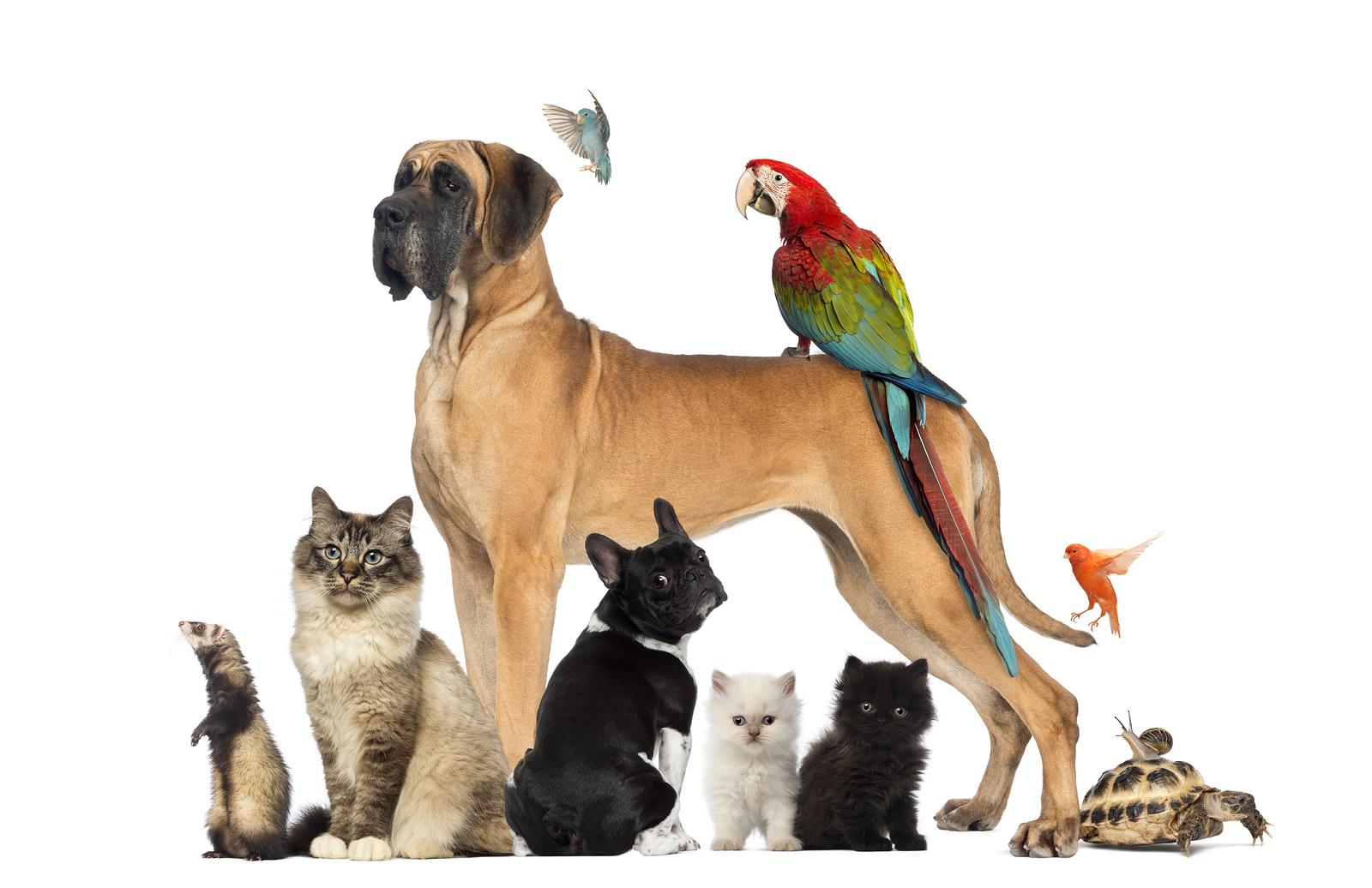 Not Just Pets – An Online Independent Pet Shop