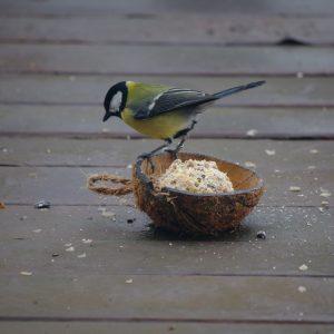 Wild Bird Food and Treats